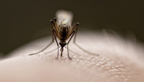 Was tun gegen Stechmücken? - Top-Gesundheitstipps
